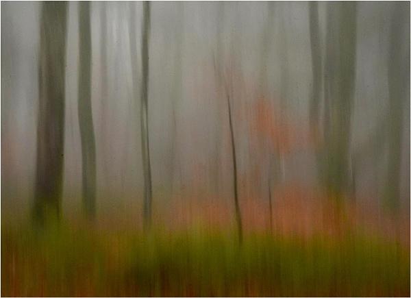 Mist in the Beechwood 5 by MalcolmM