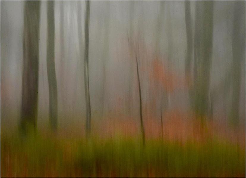 Mist in the Beechwood 5