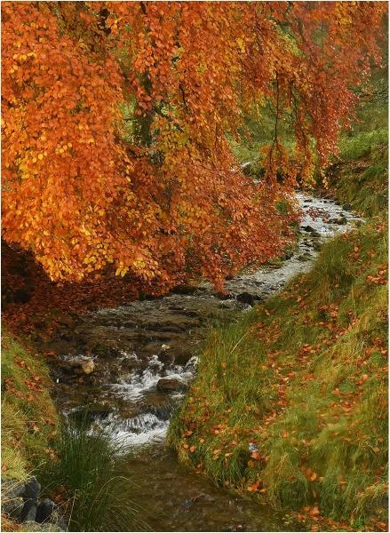 Autumn in Glen Prosen by MalcolmM