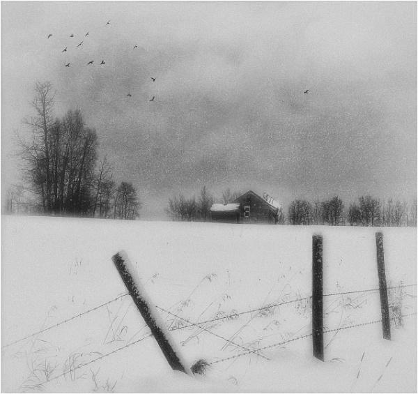 Alberta Winter by MalcolmM