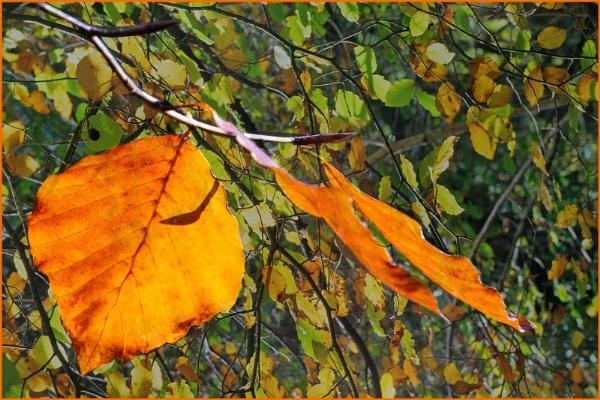 Autumn Impressions by SueB277