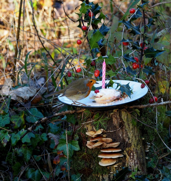Not long now till Christmas,a lovely mealy worm and nut mince pie to look forward to. by niknakpaddywhack