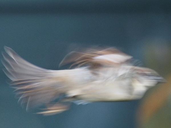 Warp drive sparrow by GwB