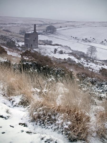 Betsy in Snow by oldbloke