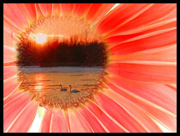 Sunrise Daisy by jrsundown