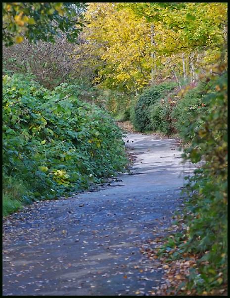 A River Rhymney Walk :- by Badgerfred