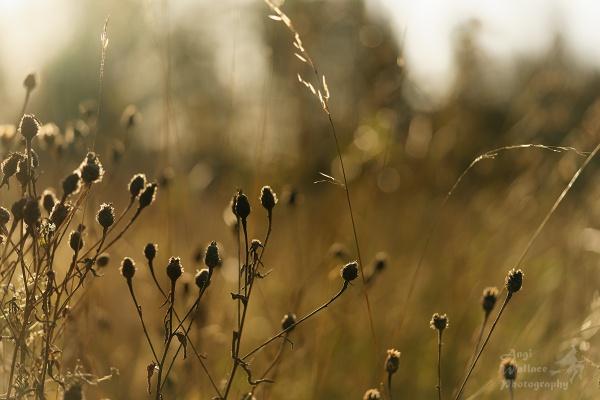 Sunshiney day by Angi_Wallace