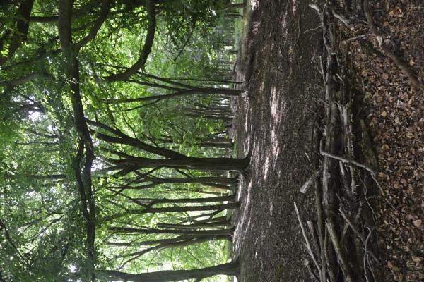 Trees by peterthowe