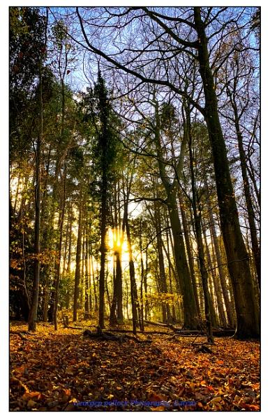 Woodland walk by airfreq