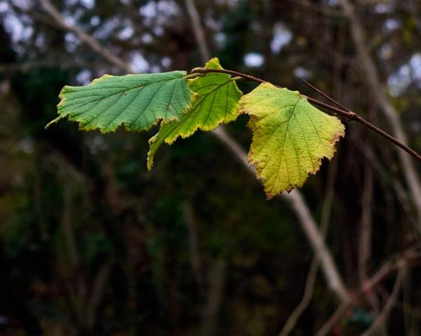 Autumn Leaves by Meditator