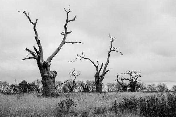 Creepy trees by 64Peteschoice