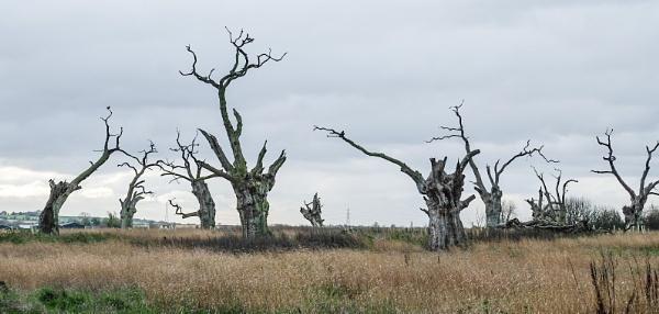 Old oak trees by 64Peteschoice