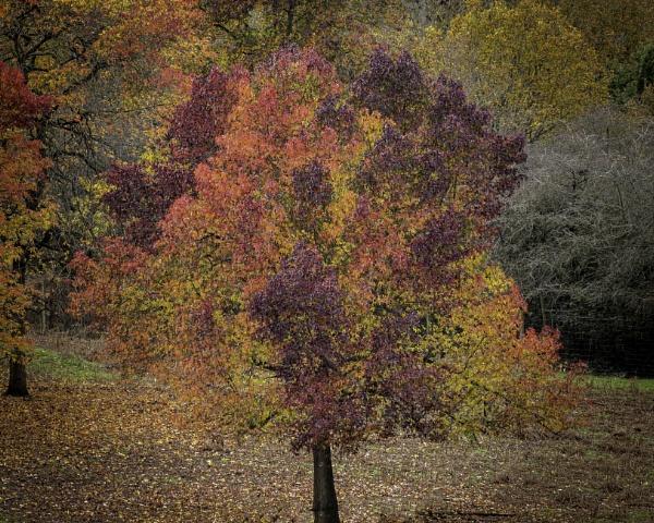Autumnal by adamsa