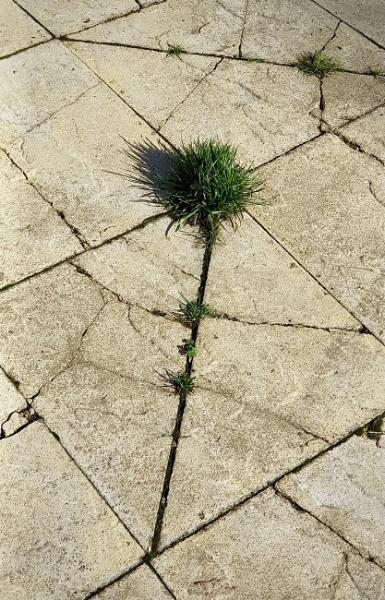 Through the Cracks by nclark