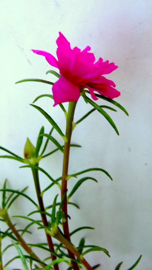 """"""" LITTLE FLOWERS """""""