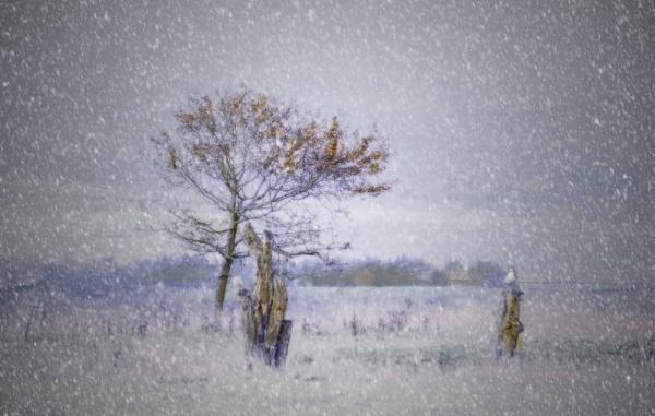 Snow Is Falling by sweetpea62