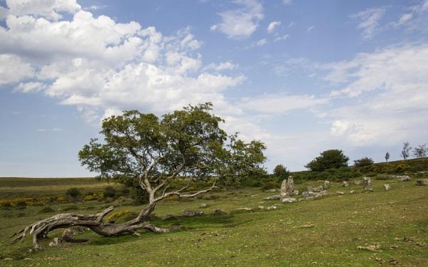 Dartmoor Tree & Standing Stones by Irishkate