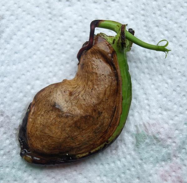 Not a slug! by JuBarney