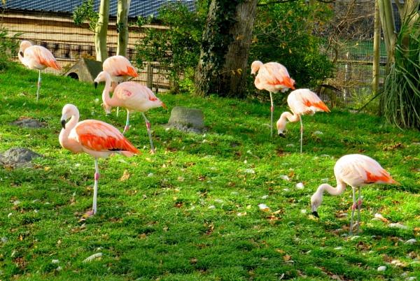 Pretty flamingos by ddolfelin