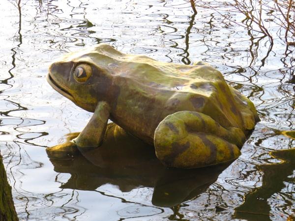 Frog by ddolfelin