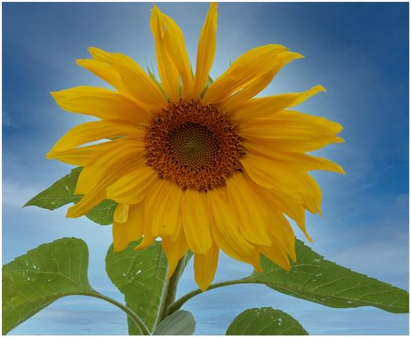 Sunshine by capto