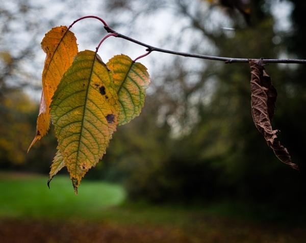 Autumnal Leaf 4 by Nikonuser1