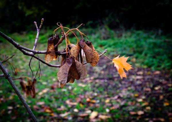 Autumnal Leaf 6 by Nikonuser1