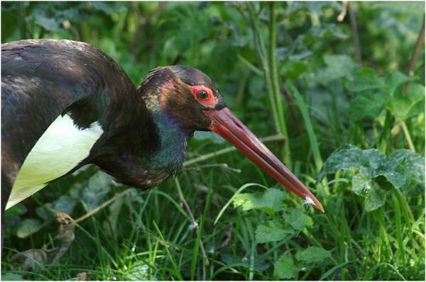 One Vicious Beak by johnriley1uk
