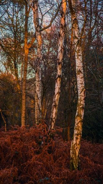 last embers... by estonian