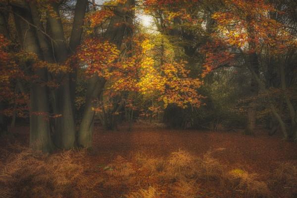 Autumn Colours by Les_Cornwell