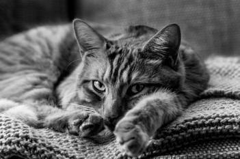 Ginger Cat - Portrait 8