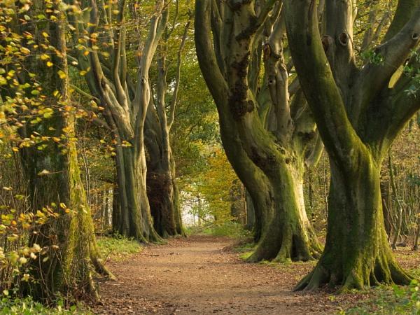 woodland way by alfpics