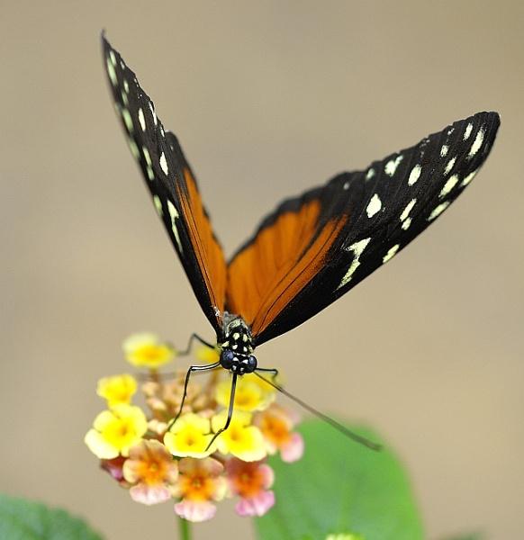 Butterfly  Macro by robertsnikon
