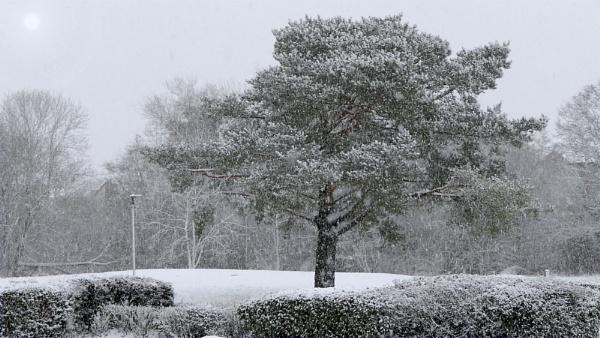 Urban Snowfall. by Tooma