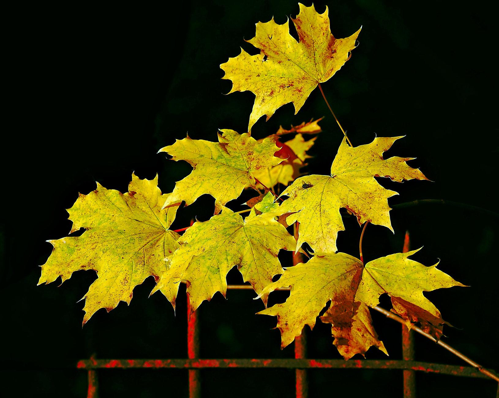 Railing Against Autumn.