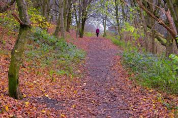 "'A Walk in November""."