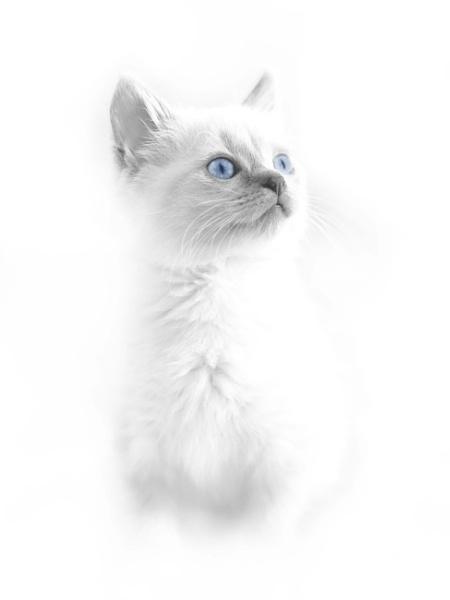 Kitten by Wireworkzzz