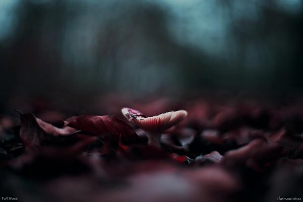 Fall Blues by HarmanNielsen