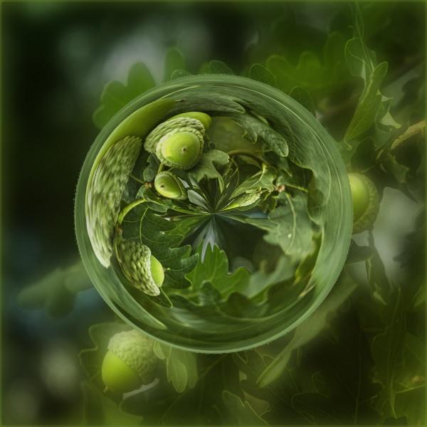 Acorn Orb by AlfieK