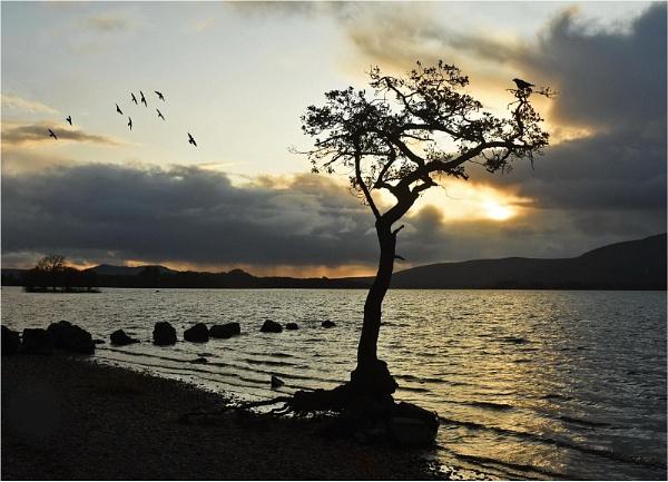 Lone Tree, Lone Bird. by MalcolmM