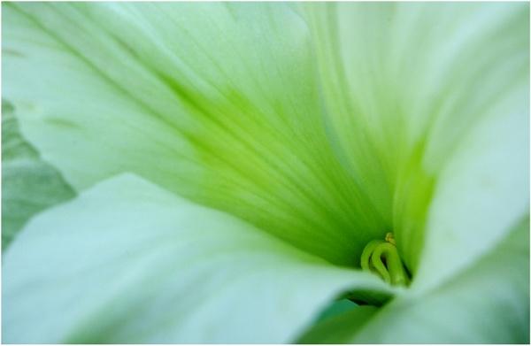Alstroemeria Macro by SueB277