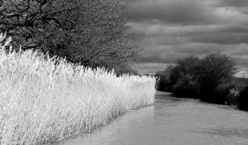 Reeds encroaching the canal