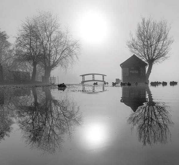 Ducks Deluxe by Alan_Coles