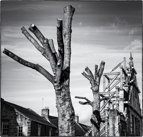A walk around Hexham 3 by mrswoolybill