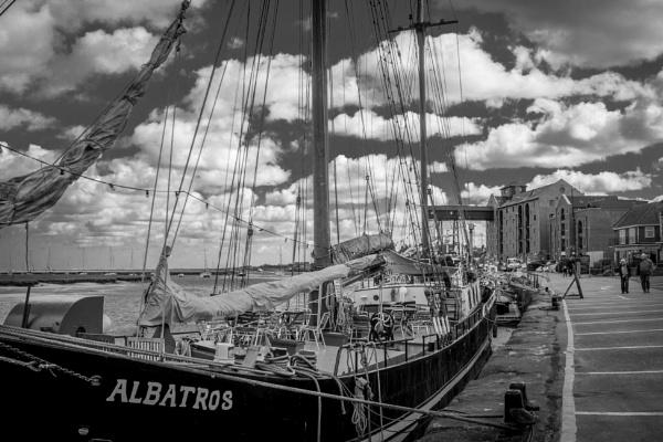 Albatros by jimlad