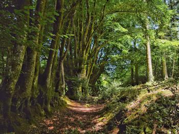 Old greenway, Devon