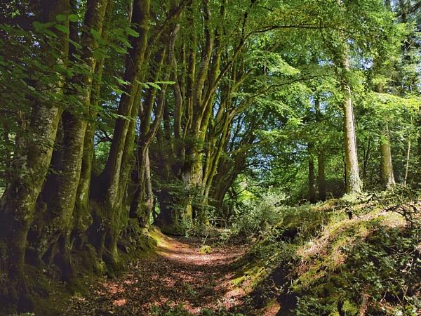 Old greenway, Devon by mitchellhatpeg
