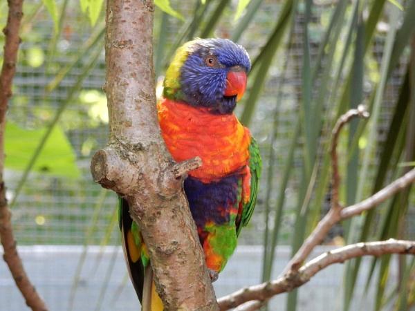 Colourful Bird by Jew
