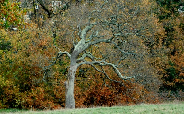The Standout Tree. by SUE118