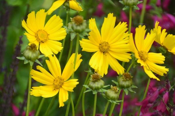 Flowers by peterthowe